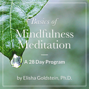 Basics of Mindfulness Meditation: A 28 Day Program